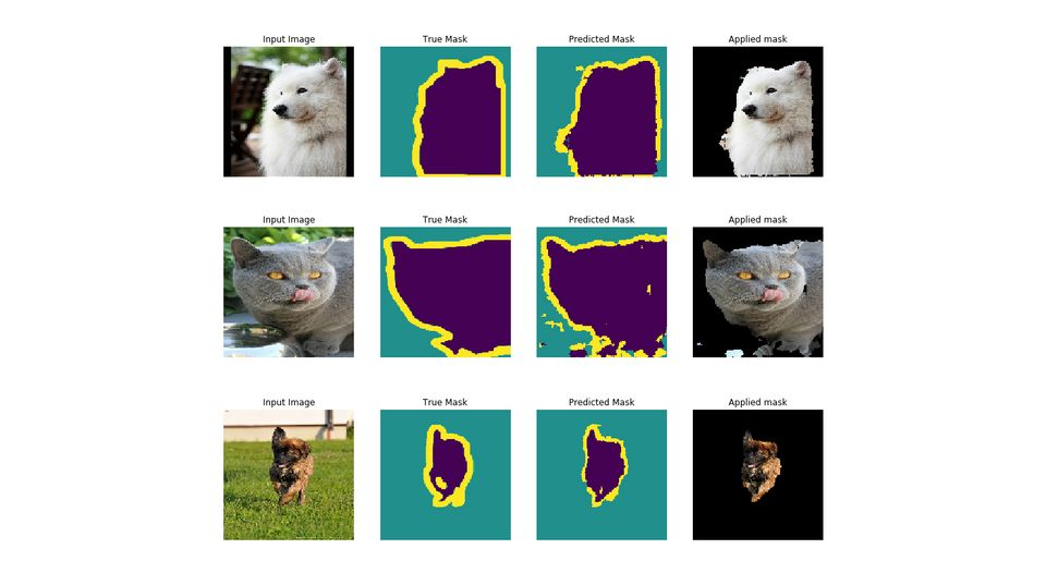 Image segmentation model in action